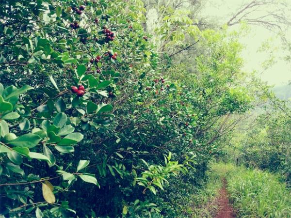 Kaneohe hike 3