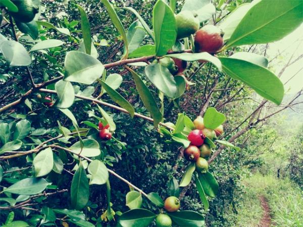 Kaneohe hike 4